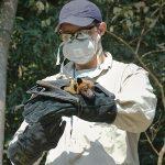 Jon Epstein handles a collared bat in Bangladesh