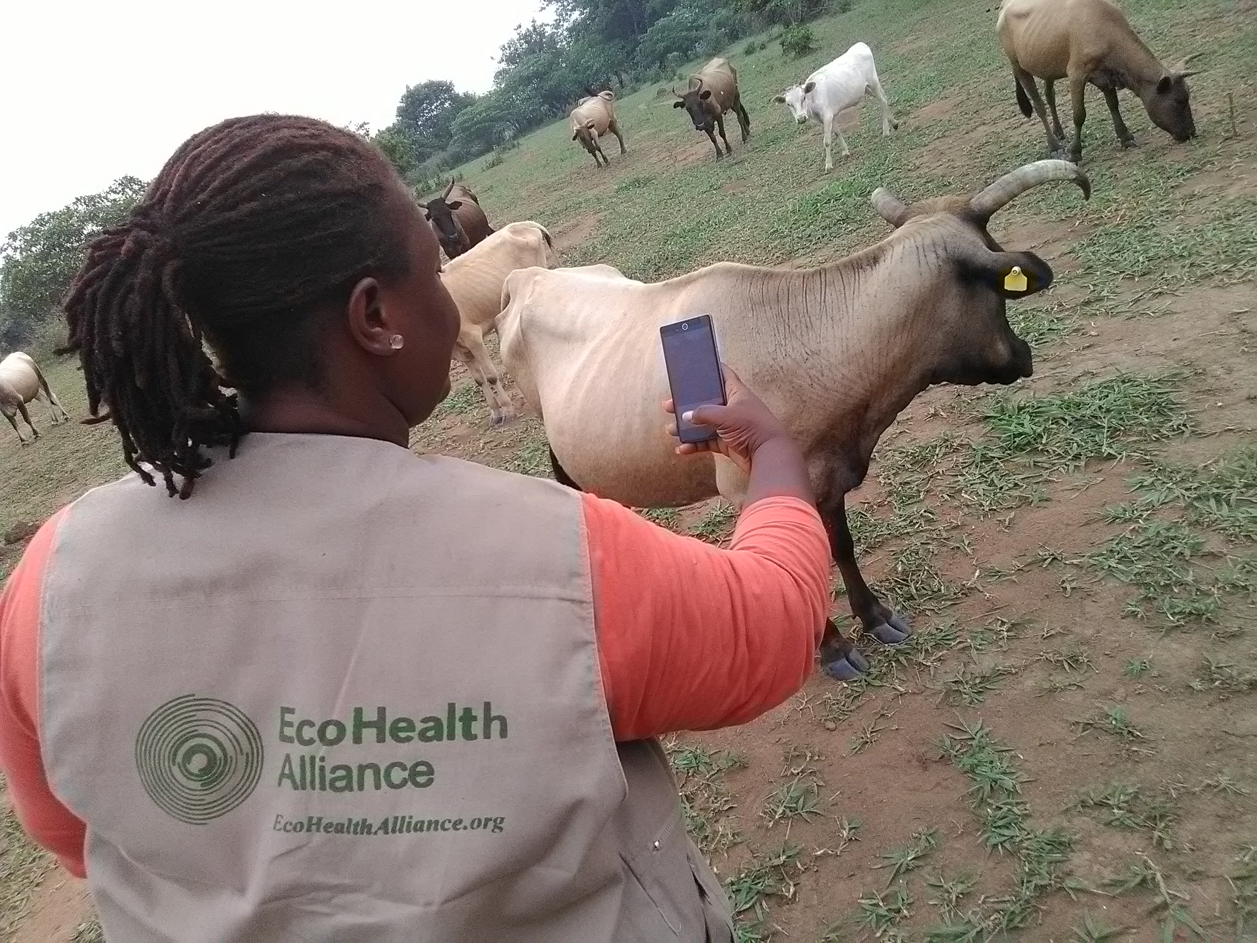 Nenneh conducting field work for EcoHealth Alliance in Liberia