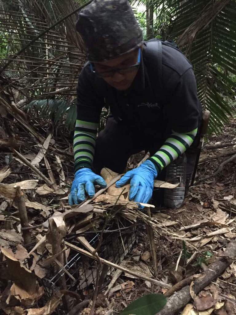 EcoHealth Alliance Ranger Saifullah sets up a trap to catch animal specimens