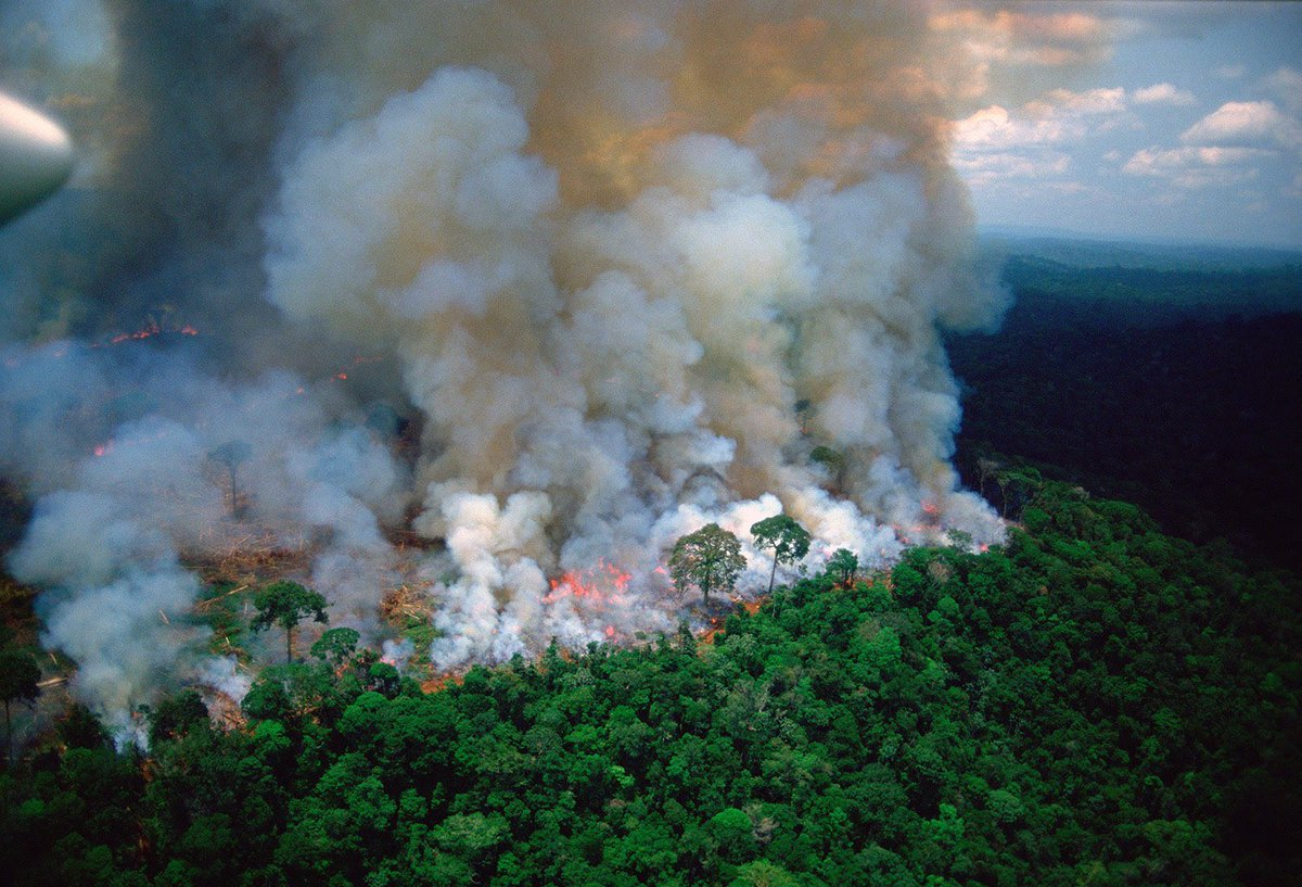 The Amazon Is Burning - EcoHealth Alliance