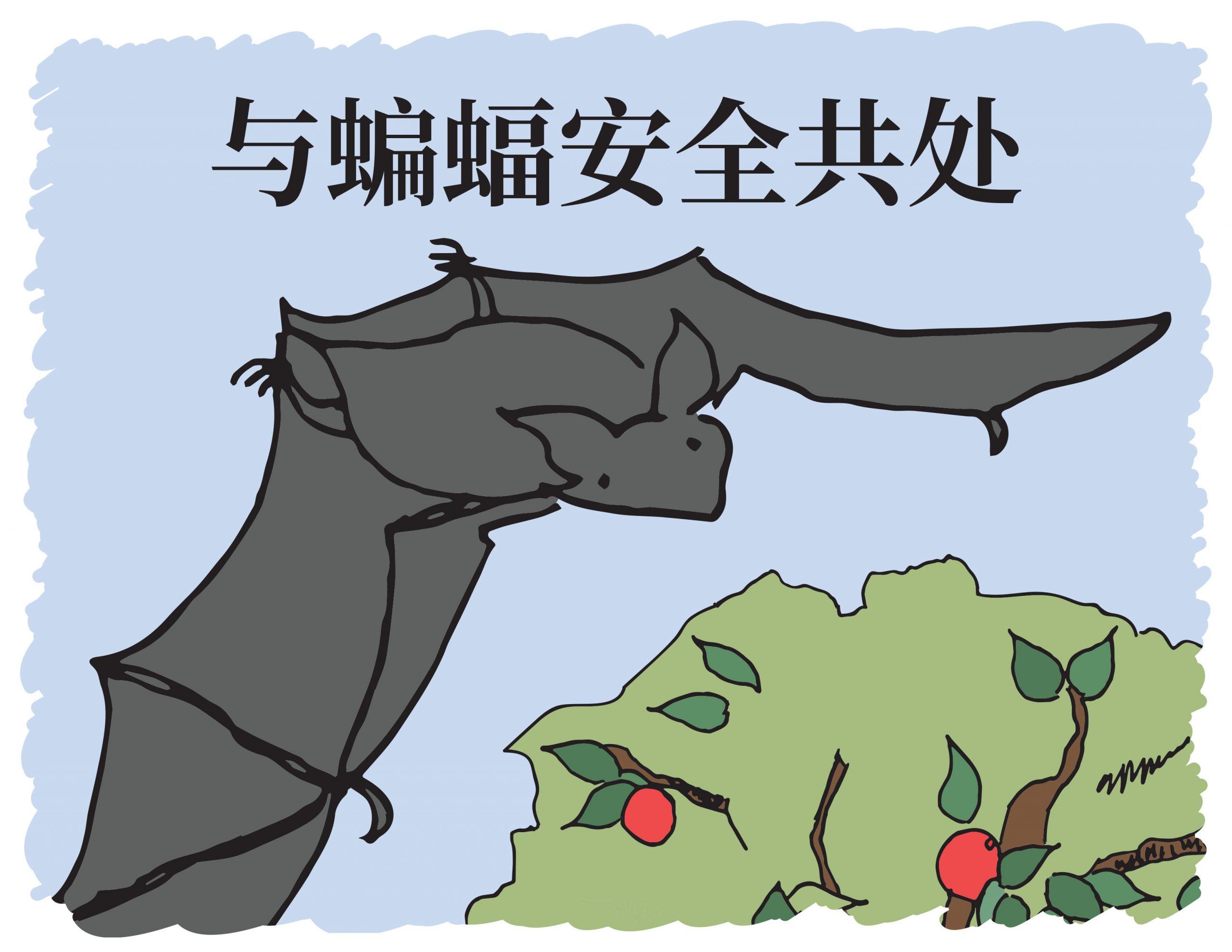 Living Safely with Bats - Mandarin