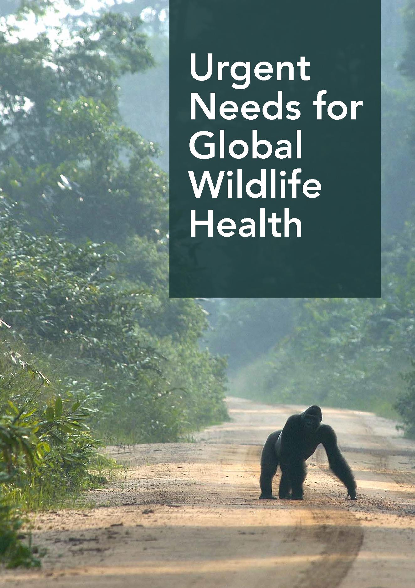 Urgent Needs for Global Wildlife Health
